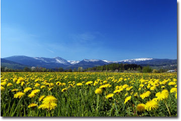 meadow_mountains1